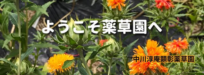 中川淳庵顕彰薬草園